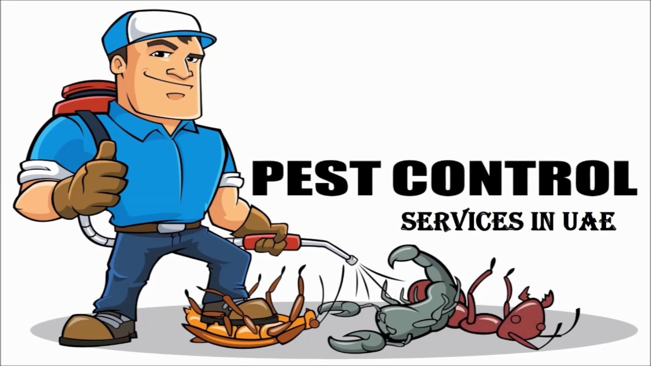 Guaranteed Pest Control Dubai Services Near You
