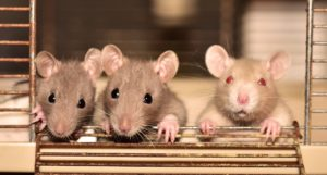 6 Best Rodent Killer for a Clean & Safe Home