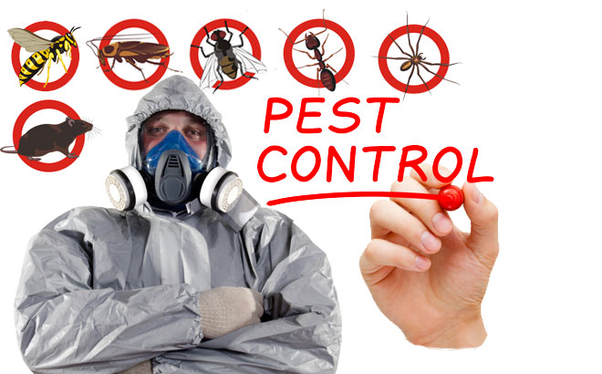 10 Effective Tips to Prevent Pests Infestation in Your House