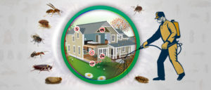 Best Pest Control Service in Abu Dhabi | Get Upto 20% Off
