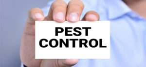 Pest Control Dubai: Book Service Online and Get discount up to 50%