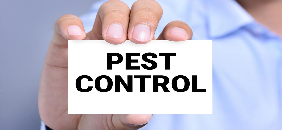 Read more about the article Pest Control Dubai: Book Service Online and Get discount up to 50%