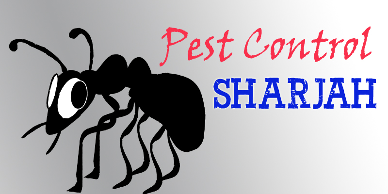 Get the Best Pest Control Service in Sharjah | Book and get upto 20% off