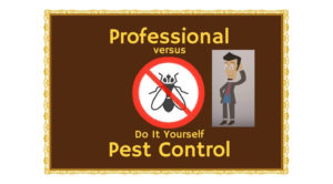 Best bed bugs killer, Natural Bed Bugs Killer, Pest control Dubai, Bed bugs service , Pest control Dubai Price, Pest control, Pest control dubai price